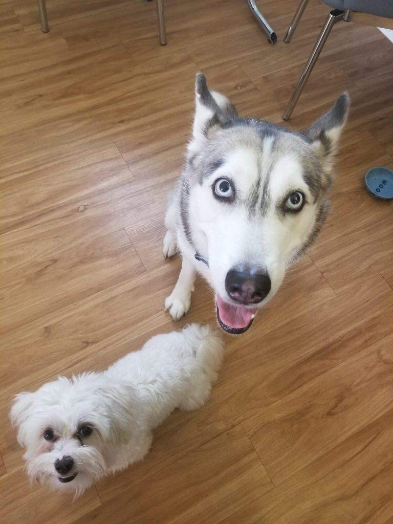 picture of two cute dogs