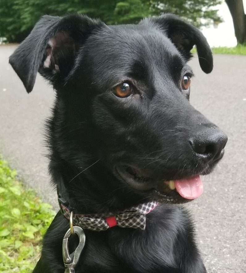 handsome dog picture
