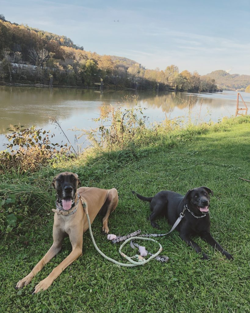 picture of two dogs by the river
