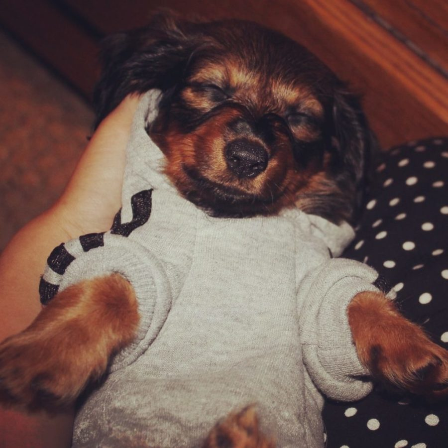cute puppy sweater image