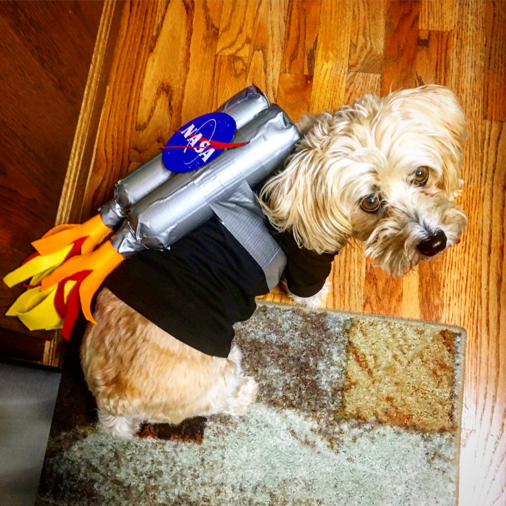 funny dog rocket picture