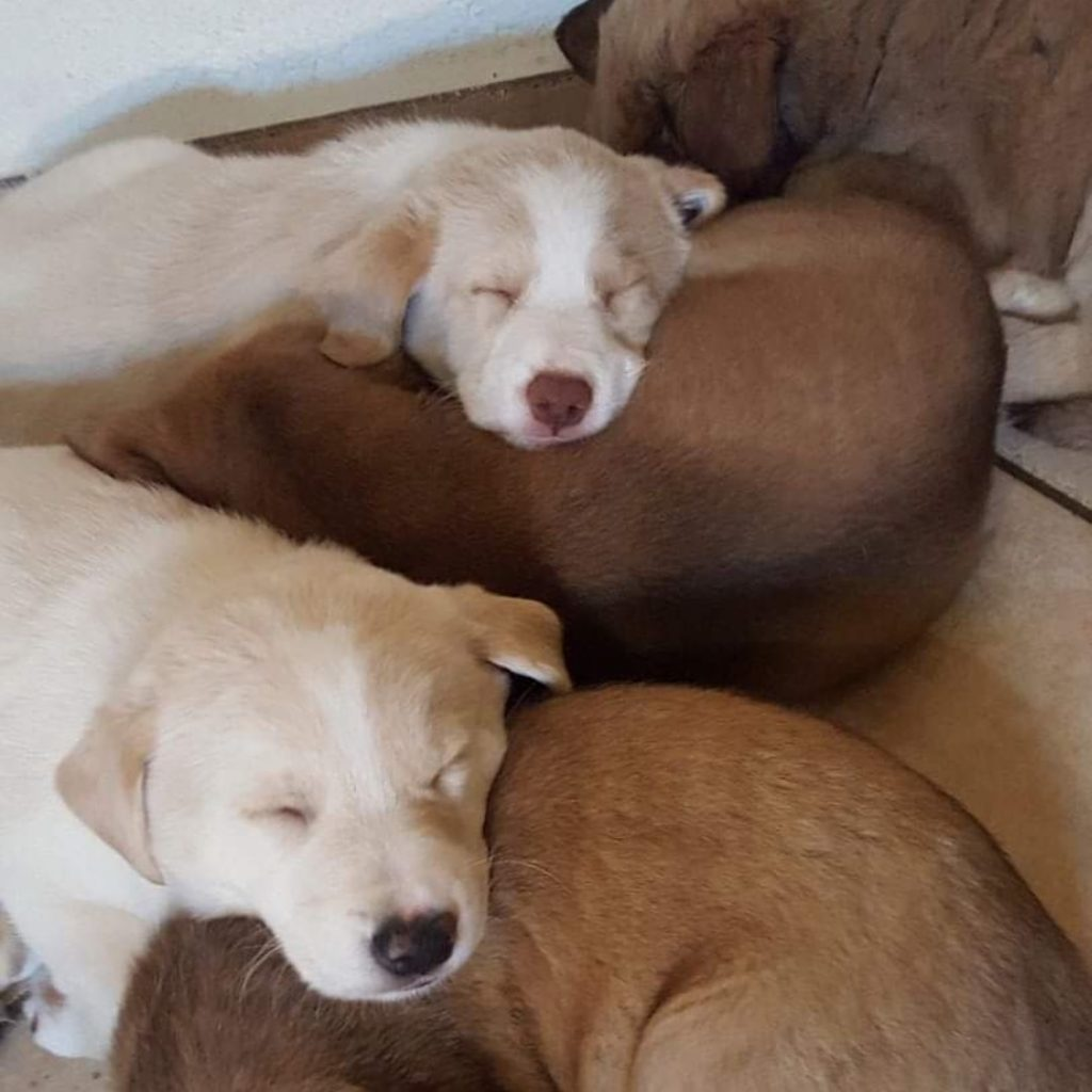 cute sleeping puppy picture