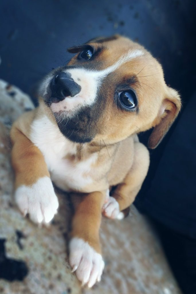 amazing cute puppy picture