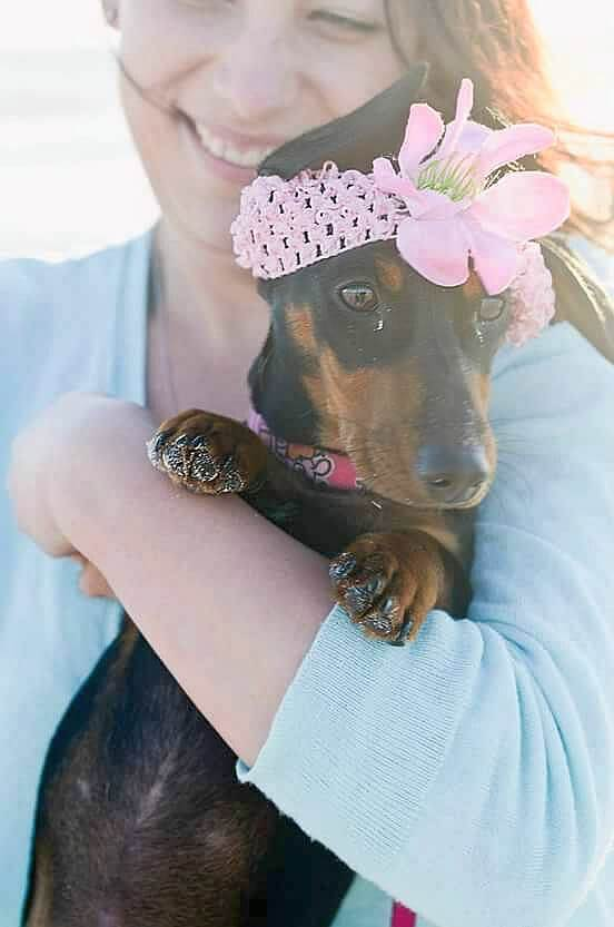 holding a dachshund puppy picture