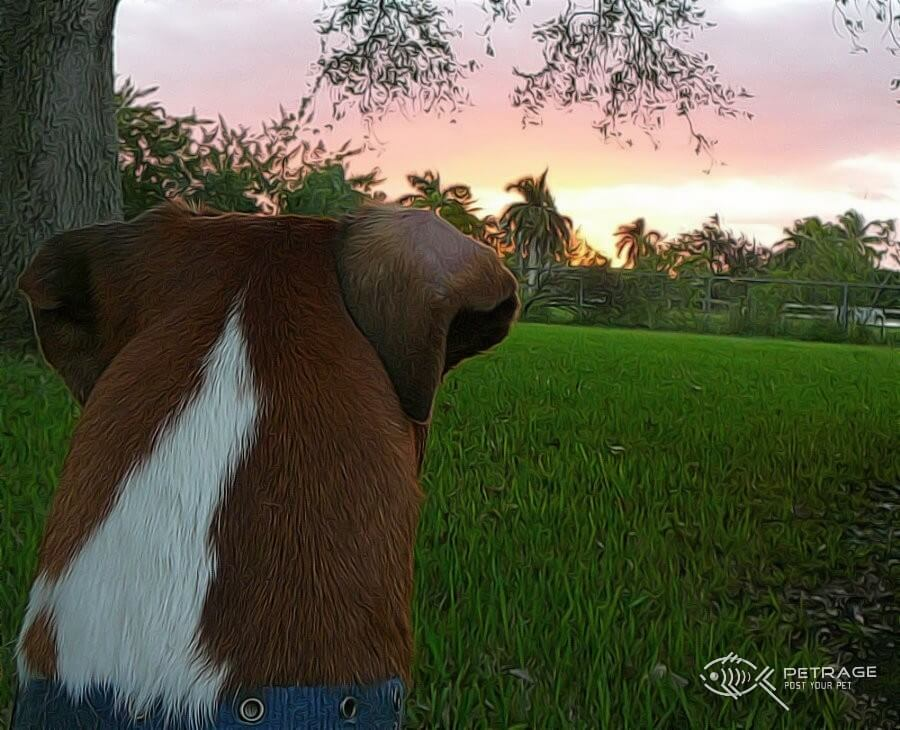 picture of me any mt dog wtching the sunset (2)