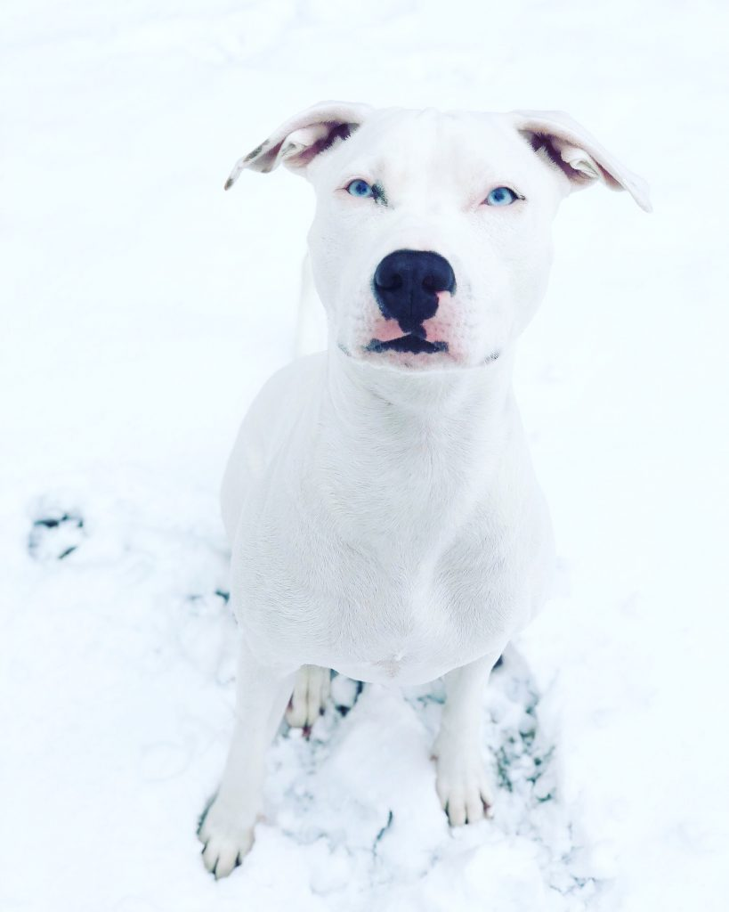 white dog in the snow image