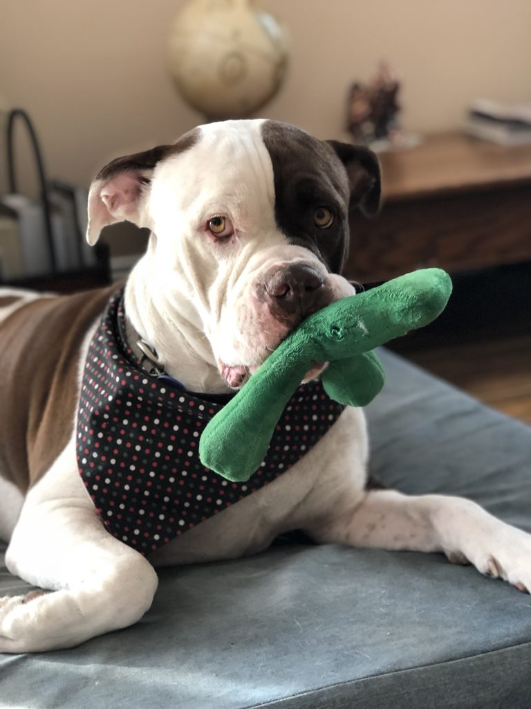 dog and his toy