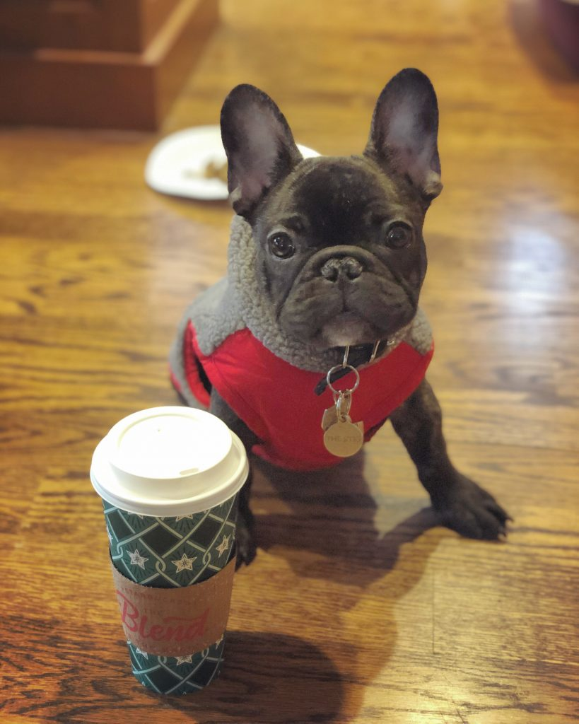french bulldog and coffee cup