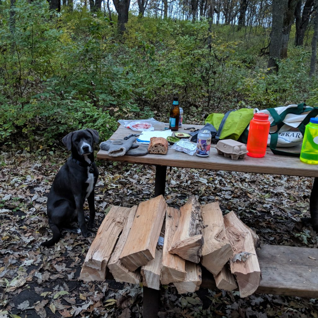 picture of my dog camping