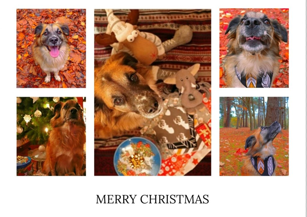 dog collage pictures
