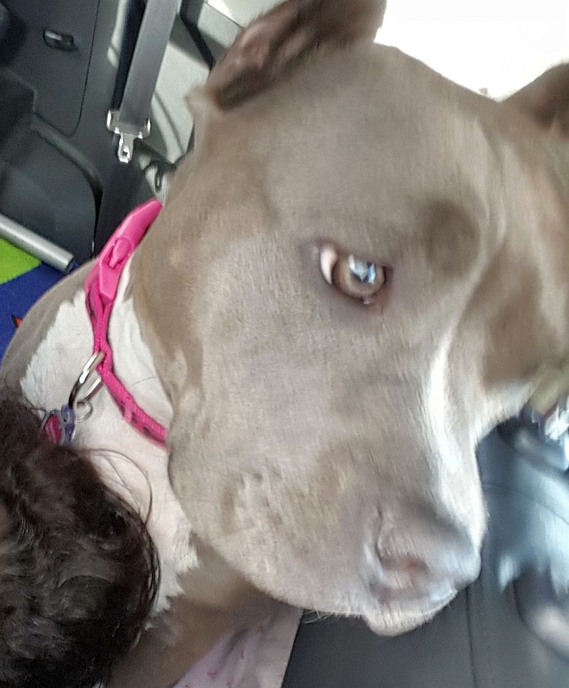 blue nose brooklyn in the car two