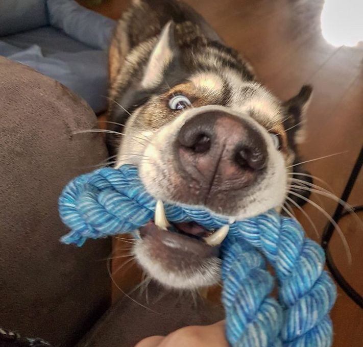 dog biting rope picture