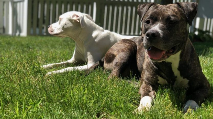 dogs-on-a-beautiful-day