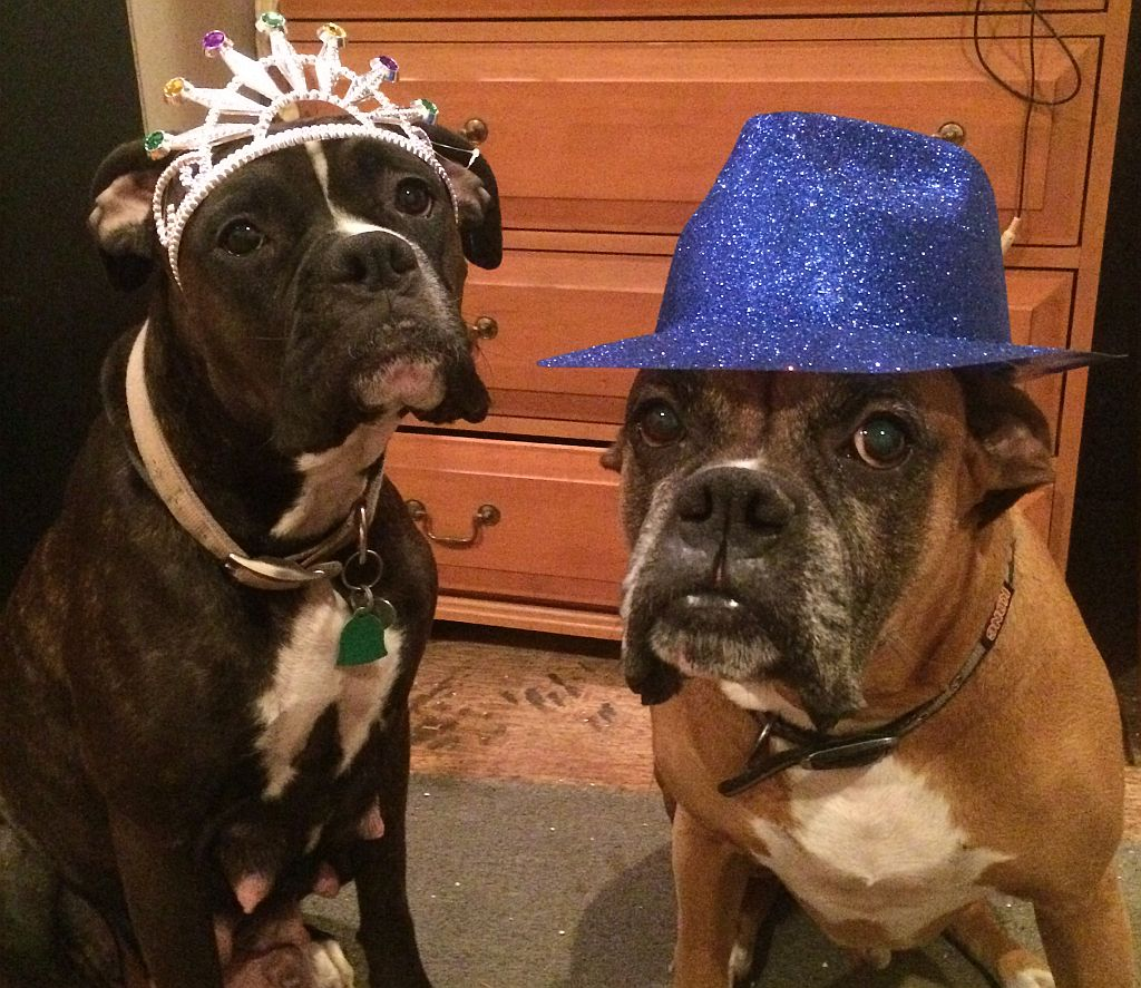 happy new year boxer dogs