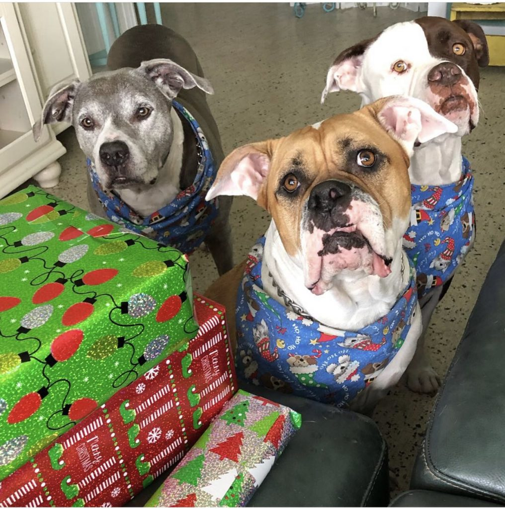 three dogs looking at you