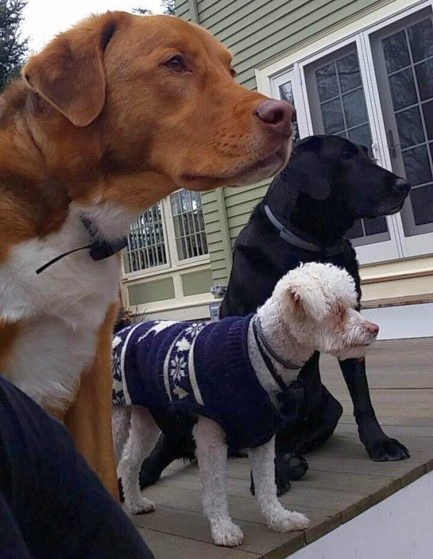three serious dogs