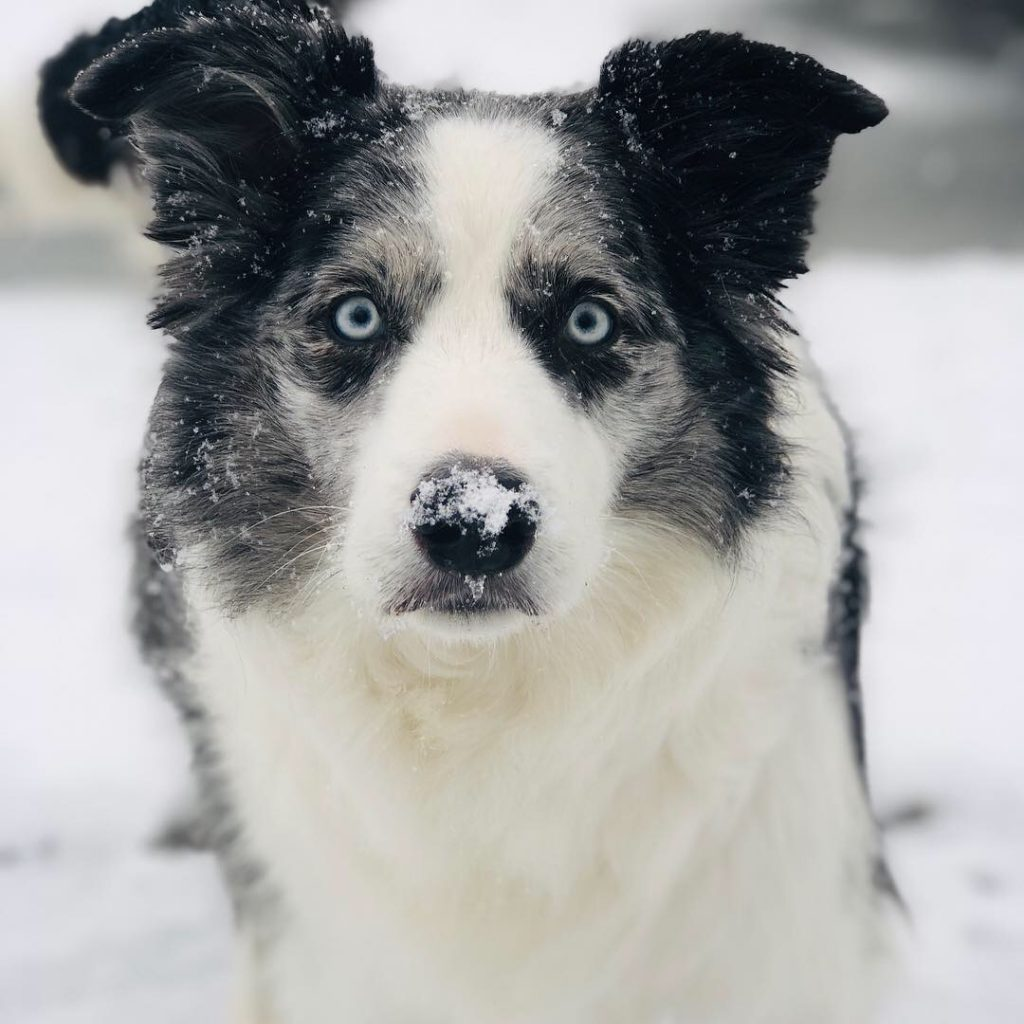 cute dog face in the snow image