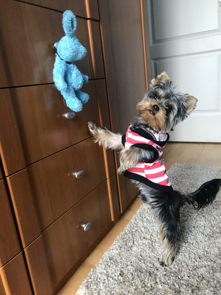 dog wants his toy