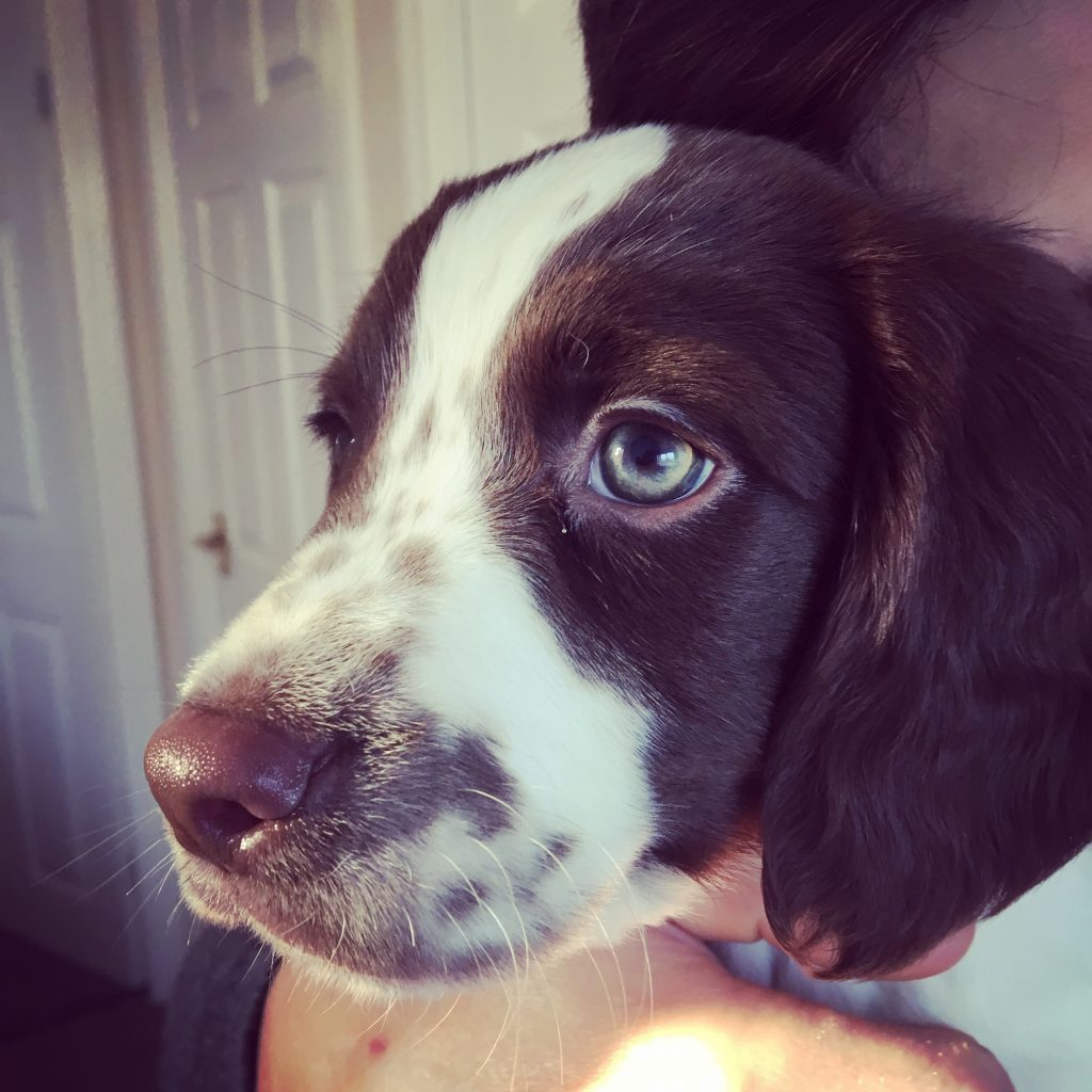 puppy dog eyes picture cute