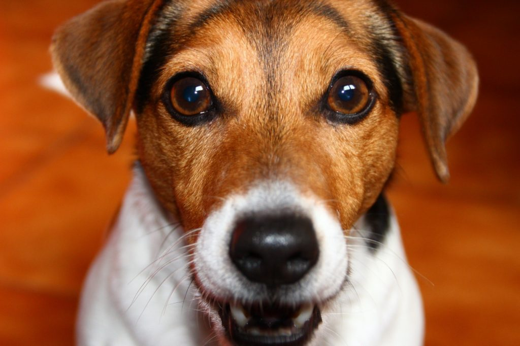 cute dog face close up picture