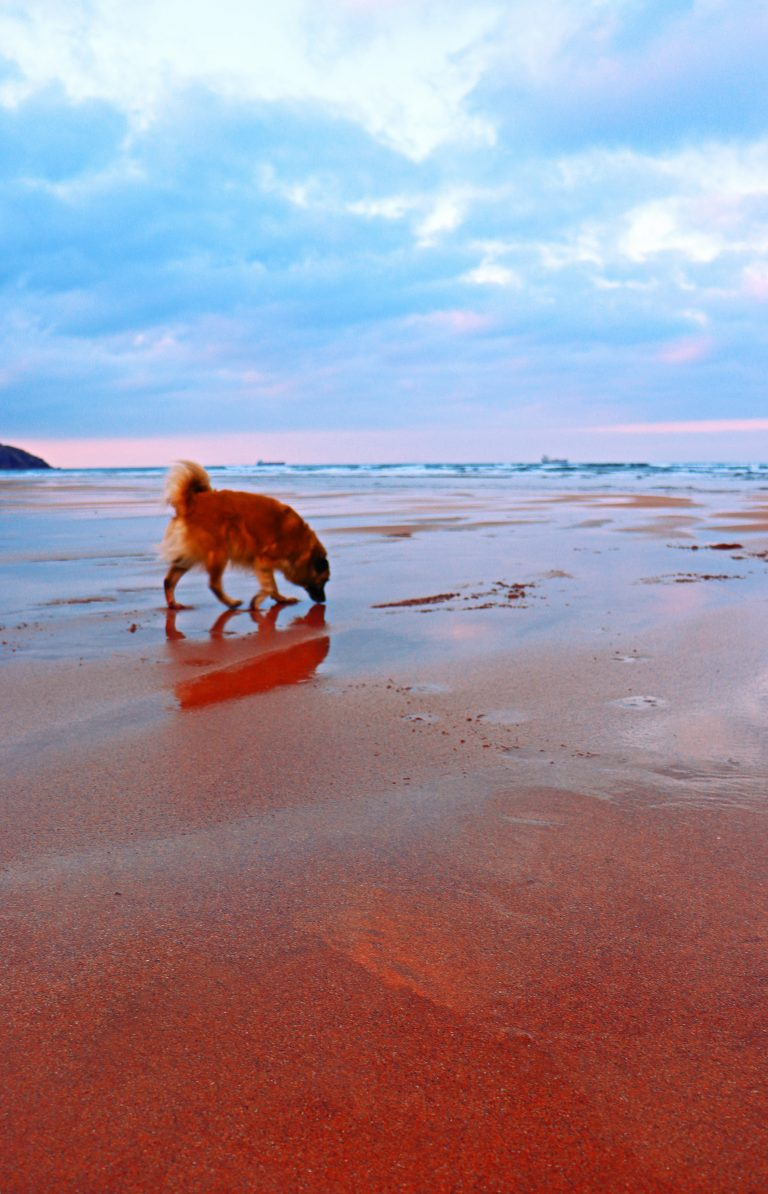 picture of my dog on the beach