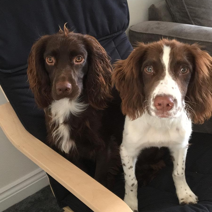 two dogs on a chair