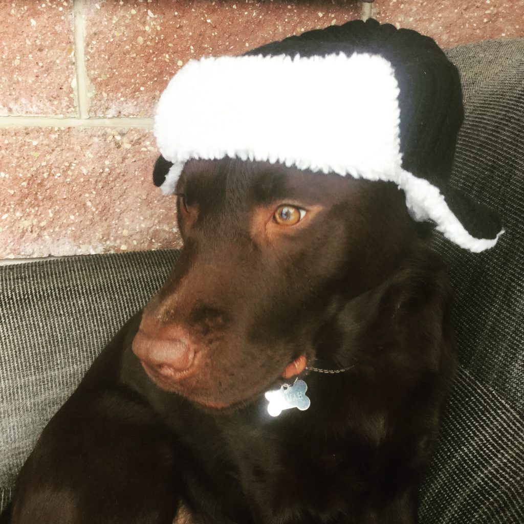 dog in a hat picture