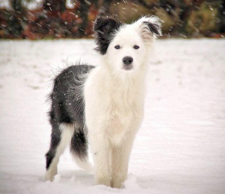 puppies first snow