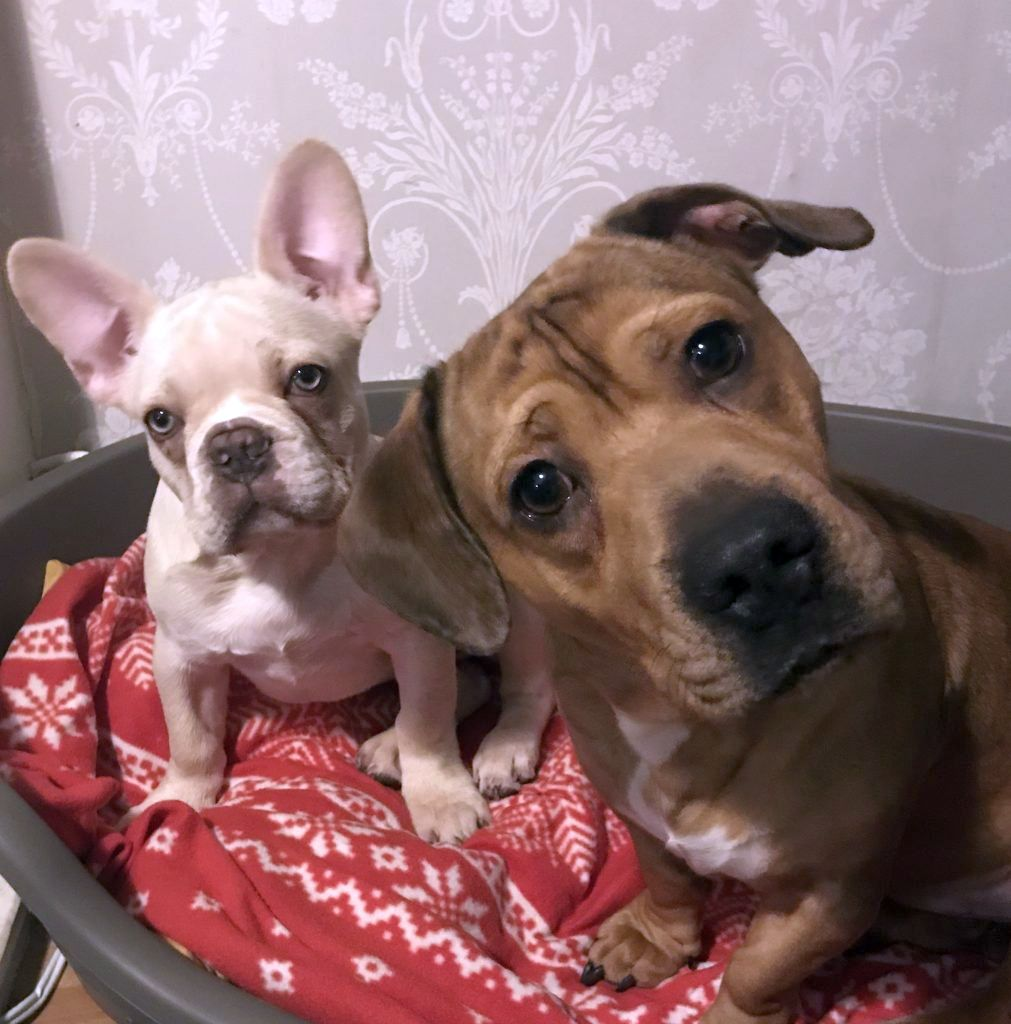 two puppies looking at me image