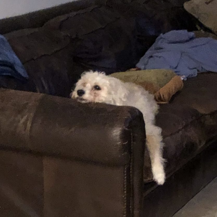 dog chill couch