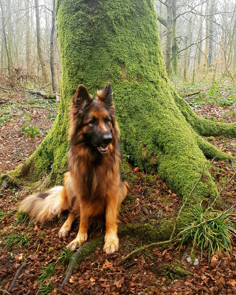 weekend forest walk with my dog