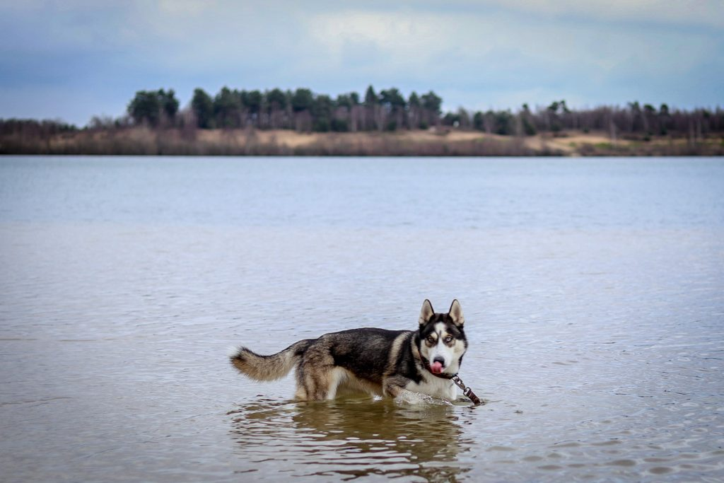 my dog the water monster