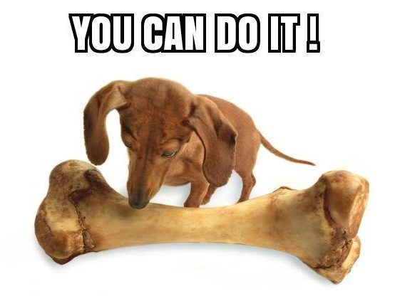 you can do it meme