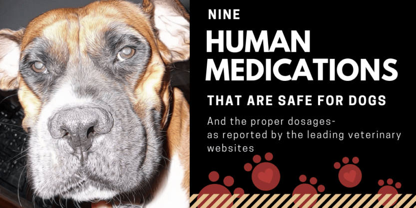 nine vet approved human medications generally safe for dogs