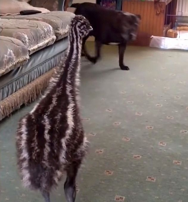 baby emu things it's a dog video