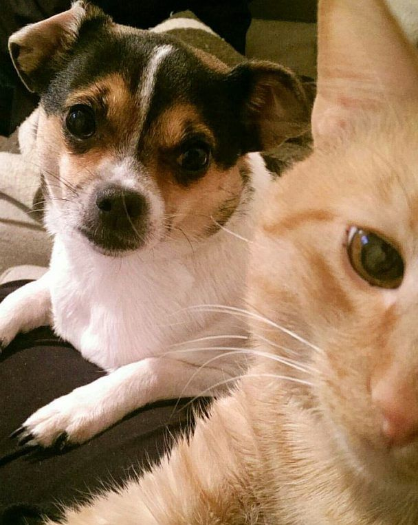 puppy and kitten picture