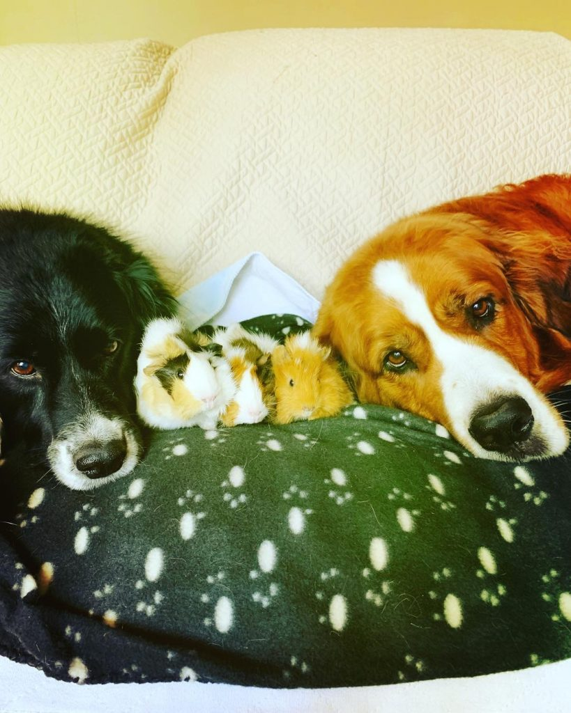 two chilling dogs
