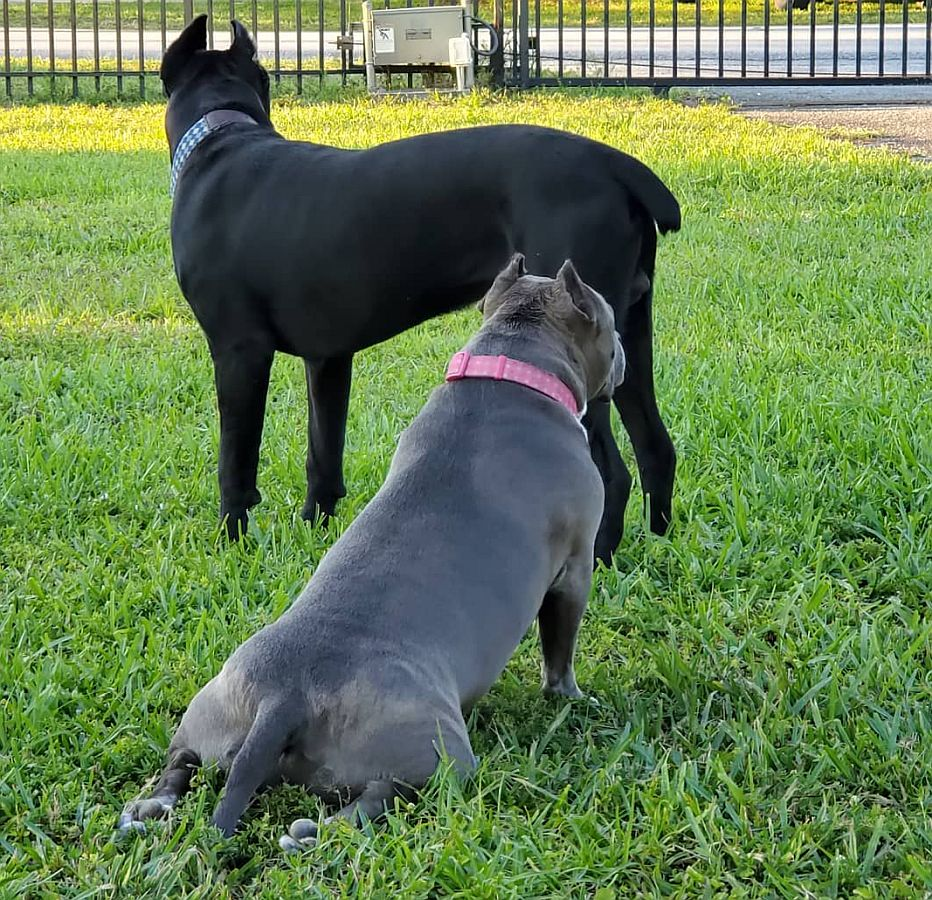 brooklyn and achilles in the yard