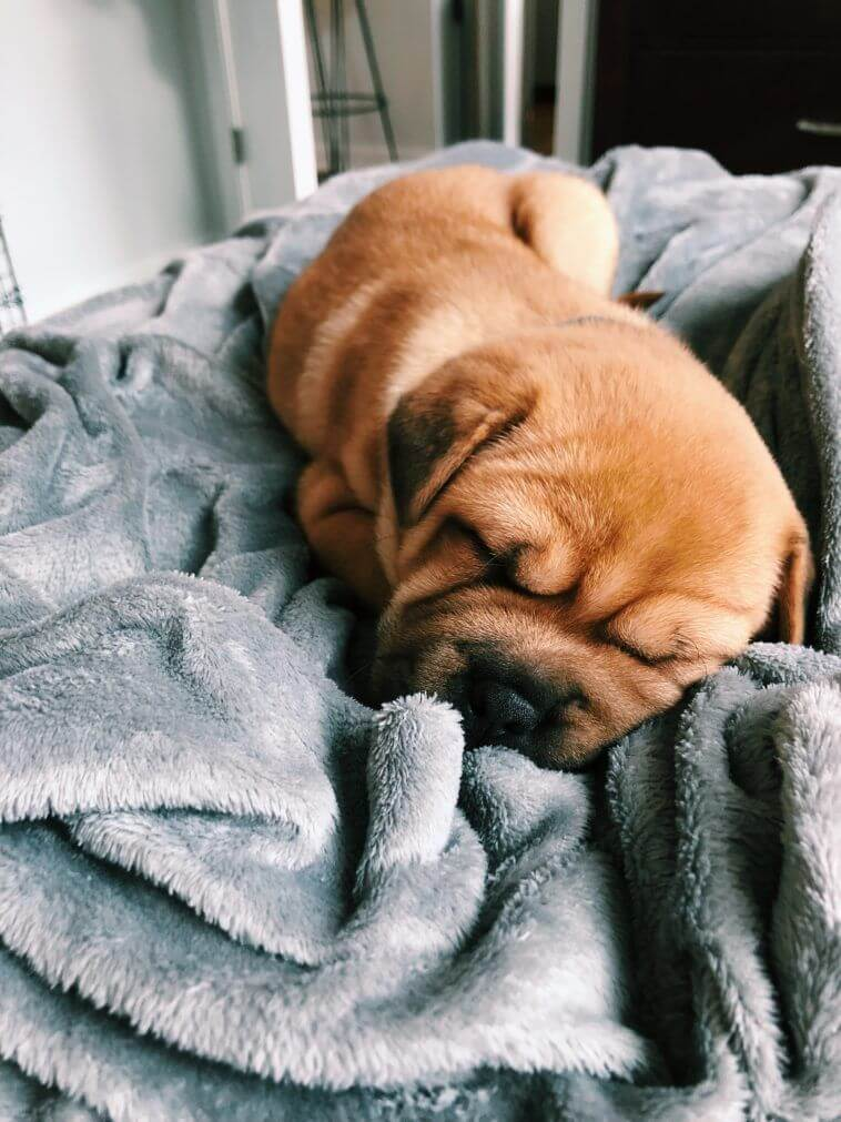 cute puppy sleeping petrage picture