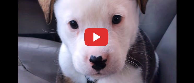 puppy confused by hiccups video