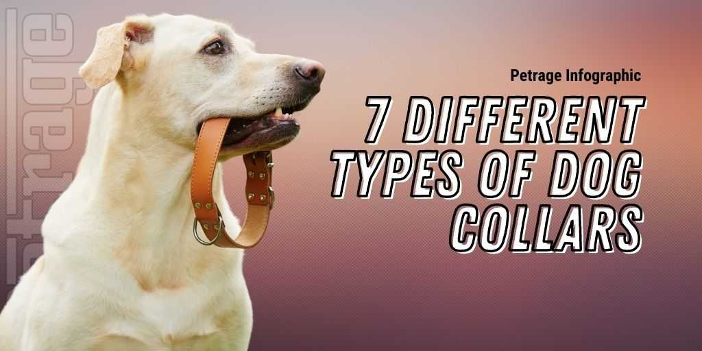 7 different types of dog collars petrage