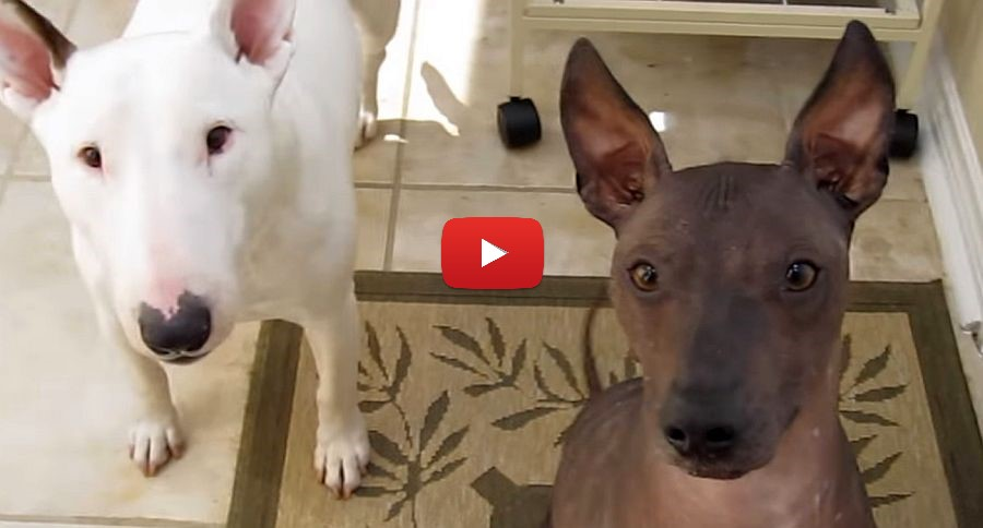 dogs waiting for a treat video