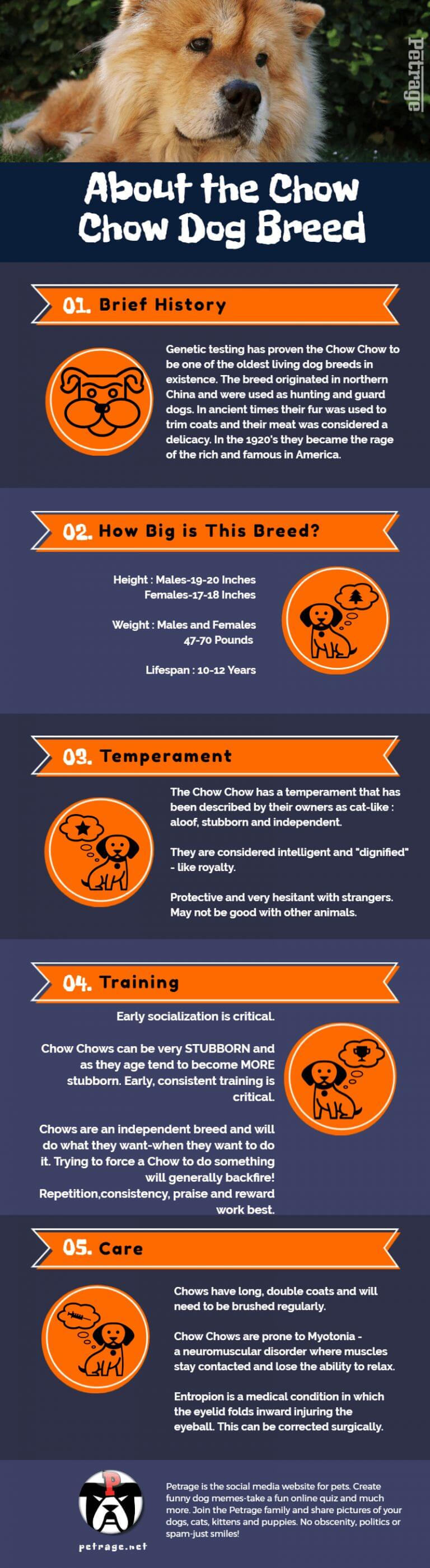 chow chow dog breed infographic petrage infographic dog breed