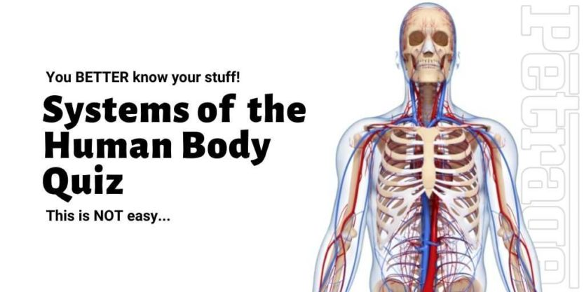 systems of the human body quiz petrage
