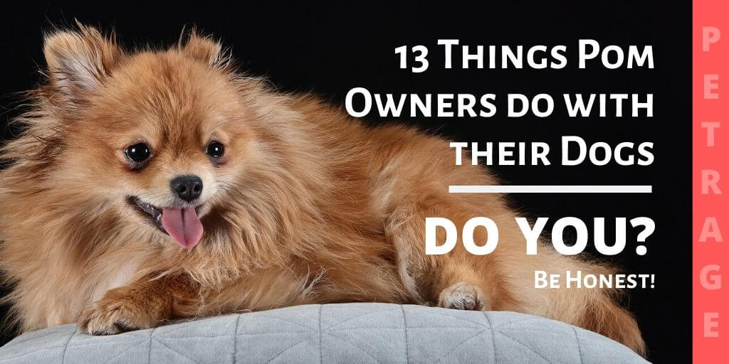 pomeranian owners have you done this with your pom petrage