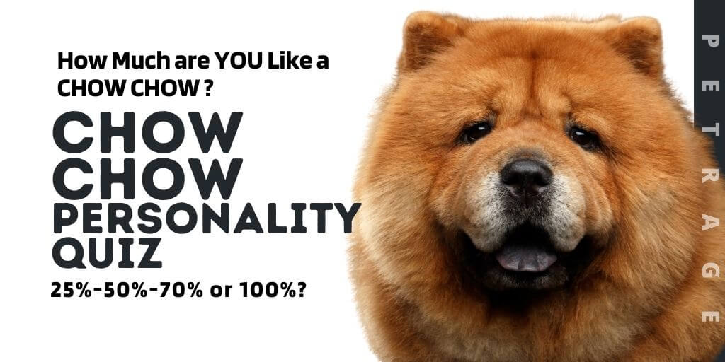 Chow Chow Personality Quiz petrage