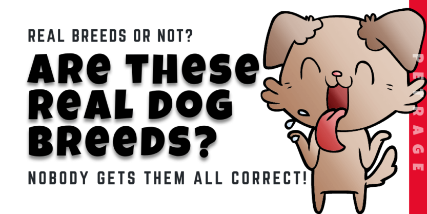 are these real dog breeds quiz petrage (1)