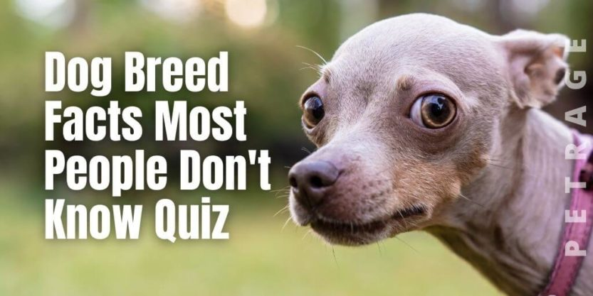 petrage quiz dog breed facts most people dont know quiz petrage (1)