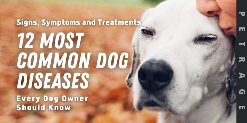 12 most common dog diseases petrage every dog owner should know