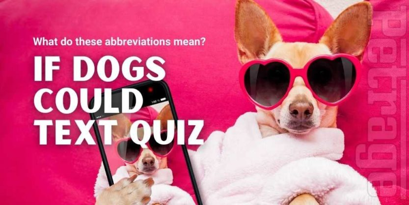 what if dogs could text quiz petrage